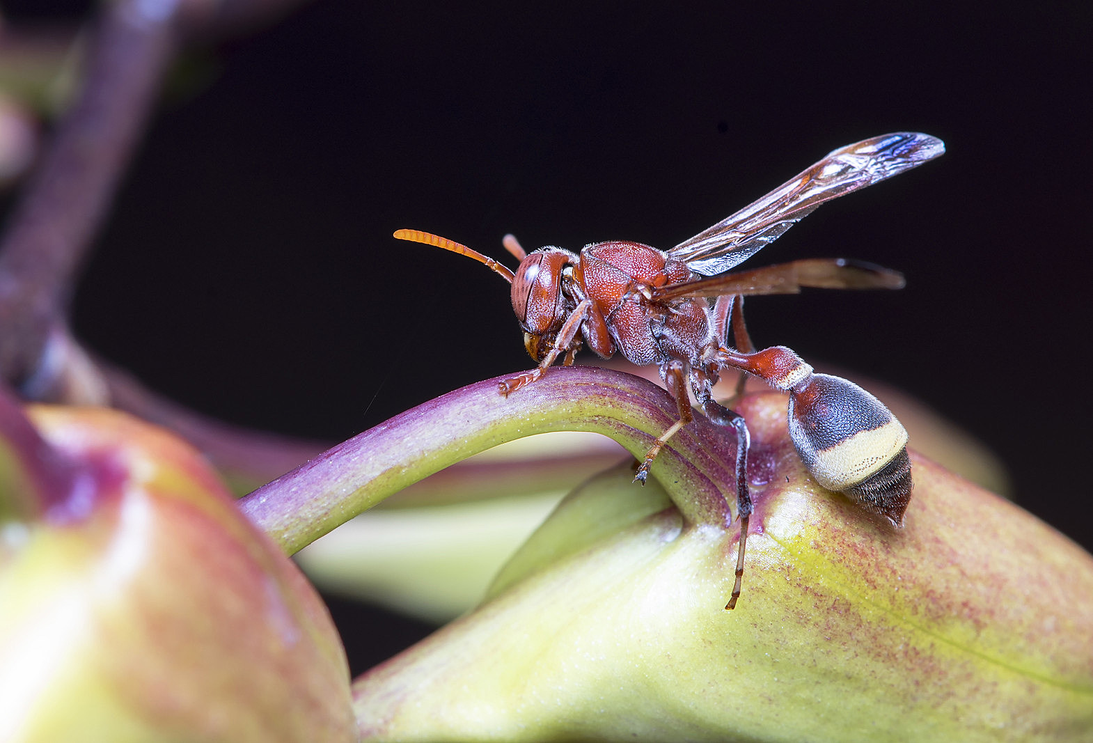 Natural insect